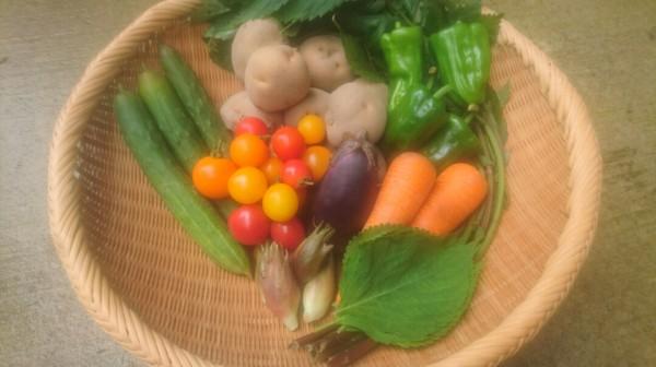 野菜セット100001